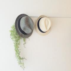 壁掛け インテリアショップ風 フェイクグリーン zw-1(人工観葉、フェイクグリーン)を使ったクチコミ「汗ばむ季節の必需品 帽子はカタチを崩した…」