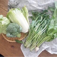 離乳食/野菜/野菜たっぷり/リミアな暮らし/LIMIAFESTA/暮らし 実家の父が仲間とやっている 畑からお野菜…