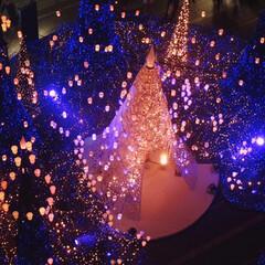 フォロー大歓迎/クリスマス/クリスマスツリー/風景/おでかけ カレッタ汐留なイルミネーション✨ Dis…(1枚目)
