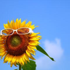 令和の一枚/おでかけ/旅行/風景/みんなにおすすめ 夏到来☀️🌻🌻🌻