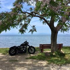 琵琶湖/あのベンチ/Harley-Davidson/ツーリング/フォロー大歓迎/おでかけワンショット 琵琶湖にある「あのベンチ」に行ってきまし…