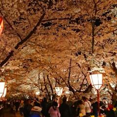 わたしのGW/弘前さくらまつり/夜桜/桜のトンネル/花筏 ✨弘前さくらまつり🌸✨ 西堀と、両岸の桜…(2枚目)