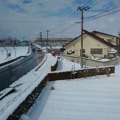 なごり雪とかのレベルじゃない/冬に戻った/風景 最近やっと雪、全部なくなって、昨日までは…