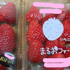 イチゴパフェ/イチゴ/紅ほっぺ いちごパフェ💕 いちご買ったのでいちごパ…(2枚目)