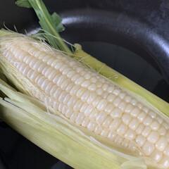 ヤマダストアー/パールホワイトとうもろこし パールホワイトとうもろこし💕 白い品種の…