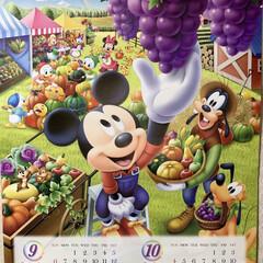 残暑厳しい/隠れミッキーカレンダー/今日から9月 隠れミッキーカレンダー💕 めくりました👍…
