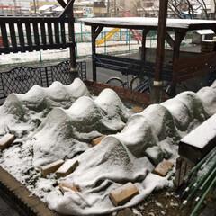 雪景色 何年かぶりの大雪☃️☃️☃️ こちらはほ…