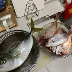 セブンイレブン/バスクチーズケーキ/れんこんサラダ/いただいたお魚達 いただいたお魚達💕 この前知り合いの方か…