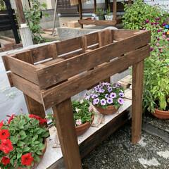 秋の寄せ植え/空中花台/DIY/ケイトウ/パンジー/アキランサス 空中花台💕 またまた旦那が作ってくれまし…