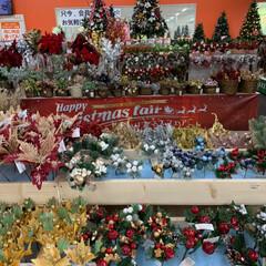 ホームセンタームサシ/クリスマスフェア クリスマスフェア🎄💕 少し離れた所にある…