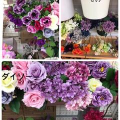 紫のお花/100均パトロール/ダイソー/セリア 100均パトロール💕 f19fv36さん…