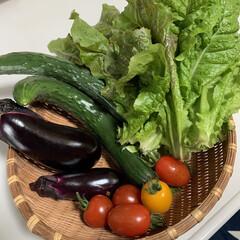 家庭菜園/夏野菜 家庭菜園収穫💕 色々採れてきました👍今年…