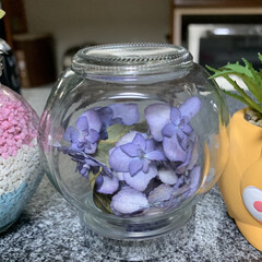 小瓶に紫陽花ドライ/紫陽花ドライ/100均/ダイソー 小瓶に紫陽花ドライ💕 ダイソーの2個で1…