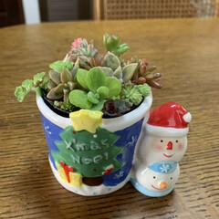 老眼鏡/ピンセット/メルカリ購入カット苗/多肉ちゃん/ちまちま寄せ植え/多肉ちゃんクリスマス寄せ植え 多肉ちゃんクリスマス寄せ植え💕 家にあっ…