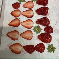 400投稿/押しフルーツ/押し花シート/半額いちご 押しフルーツ作成中💕 押し花のフルーツバ…