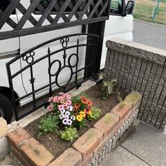 味噌とんこつうどん/シャトレーゼ/花壇寄せ植え 花壇に寄せ植え💕 今日は車で30分程の実…(2枚目)
