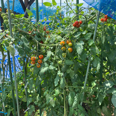 家庭菜園/令和の一枚 家庭菜園💕 すっかりジャングル化しました…(3枚目)