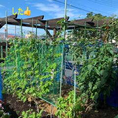 家庭菜園きゅうり収穫終了 家庭菜園きゅうり収穫終了💕計89本採れま…