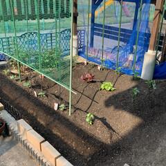 家庭菜園/野菜苗 野菜苗植え付け完了💕 昨日午後から植え付…