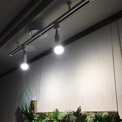 スポット照明/フェイクグリーン 先日のフェイクグリーンの大作のため玄関に…