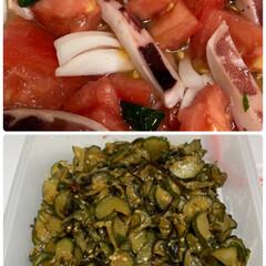 コキア/家庭菜園トマト/家庭菜園きゅうり/きゅうりのつくだ煮/トマトとイカのマリネ トマトとイカのマリネ&きゅうりのつくだ煮…