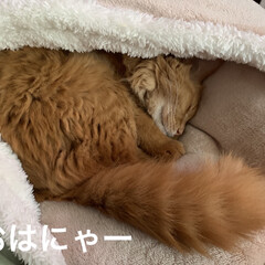 早起き/アクビ/マイベッド/ミッキー/にゃんこ同好会/猫大好き おはようございます☀  今朝の気温9℃気…