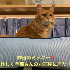 肌寒い/にゃんこ同好会/猫大好き❤ おはようございます⛅️  昨日…ミッキー…