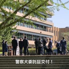 ワンピース/ルヒィ/警察犬/熊本県庁/にゃんこ同好会 こんにちは☀️  今日は、熊本県庁へ行っ…(4枚目)