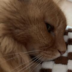 うつ伏せ寝/ミッキー/にゃんこ同好会/カービィ/スィーツ/LAWSON おはようございます☀ 今朝の気温3℃だけ…(5枚目)
