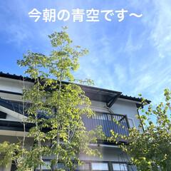 おリンセット/月命日/蝉の声/青空/ハイビスカス/ミッキー/... おはようございます☀  ハイビスカス🌺成…(2枚目)