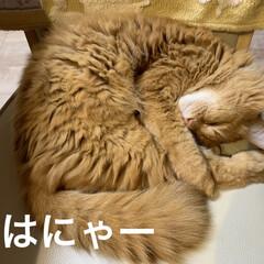 ハロウィン🎃ダンス👻/にゃんこ同好会/ねこだいすき💕/久原 おはようございます🌦  今朝気温12℃気…