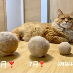 LIMIAペット同好会/にゃんこ同好会 おはようございます🌧  投稿500枚目‼…(1枚目)