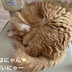 大好きなぬいぐるみ❤️/にゃんこ同好会/猫大好き❤/昨日忘れてたビール🍺/昭和懐かしのパン/セブンスィーツ おはようございます☀  今朝は、寒いと思…