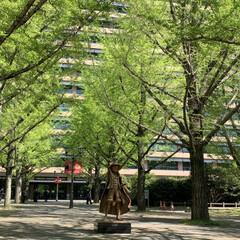 ワンピース/ルヒィ/警察犬/熊本県庁/にゃんこ同好会 こんにちは☀️  今日は、熊本県庁へ行っ…(3枚目)
