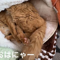 ミッキー/見晴らし台/お気に入りベッド/にゃんこ同好会/猫大好き❤ おはようございます⛅️  今朝は気温12…