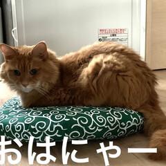 ミッキー/唐草模様の座布団/暖かい/寒い/ガスヒーター おはようございます☀  今朝は気温4℃寒…