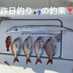 鯛の塩焼き/鯛のお刺身/鯛のカルパッチョ/太刀魚/鯛/ミッキー こんばんは🌆  昨日旦那さんが魚釣り🎣へ…(2枚目)