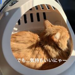 ハロウィン🎃/お出かけ/にゃんこ同好会/ねこだいすき❤️ こんにちは☀️  午前中ちょっとお出かけ…(4枚目)