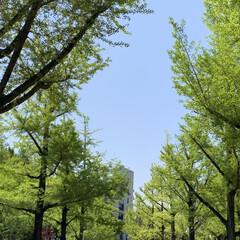 ワンピース/ルヒィ/警察犬/熊本県庁/にゃんこ同好会 こんにちは☀️  今日は、熊本県庁へ行っ…(5枚目)