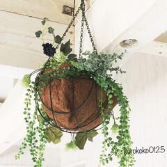 インテリア/植物のある暮らし/植物/Vita/フェイクグリーン/2018/... 梁からでている鉄筋にぶらさげています。 …