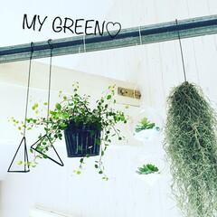植物/エアープランツ/ワイヤープランツ/3COINS/Vita/ハンドメイド/... #maRuru green 我が家をリフ…(1枚目)