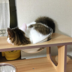 キャットタワー/猫 入ってないですね😩雪殿にはかなり狭いです…