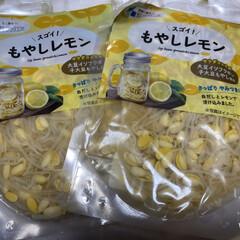 もやしレモン/サラダコスモチコリ村 サラダコスモ(チコリ村)もやしレモン届き…