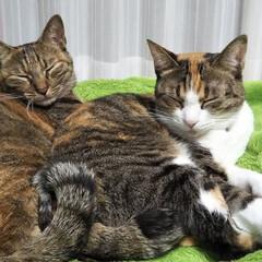 親子猫/猫