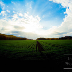 畑/風景/風景写真/写真/Nikon/アマチュアカメラマン/... カバー写真にもしているお気に入りの1枚で…