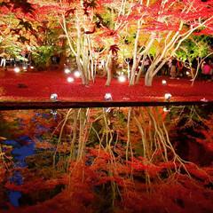 風景/紅葉/逆さ紅葉/ライトアップ/過去写真 岐阜県土岐市曽木公園の逆さ紅葉🍁