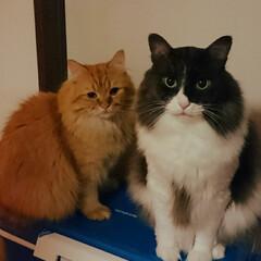 猫屋敷 地区の行事に使うクーラーboxを出してき…
