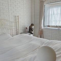 お嬢さん/猫の日/にゃんにゃんにゃんの日/のるうぇじゃんふぉれすときゃっと/ノルウェージャンフォレストキャット/LIMIAペット同好会/... 🐈 ・ 昨日、2月22日 #にゃんにゃん…(3枚目)