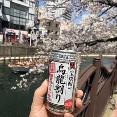平成最後の/春のフォト投稿キャンペーン/おでかけ/風景/春の一枚 大岡川沿いにて 平成最後のお花見🌸