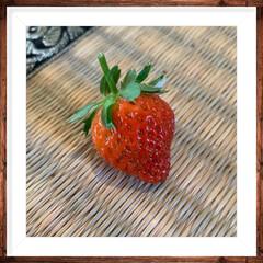朝食/お庭/収穫/イチゴ 初の収穫🍓 かなり酸っぱいのが出来上がっ…